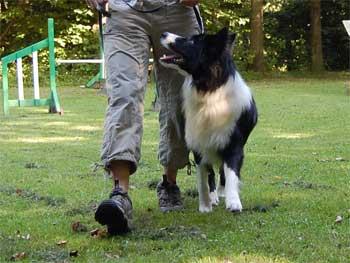 Kopy træner fri ved fod