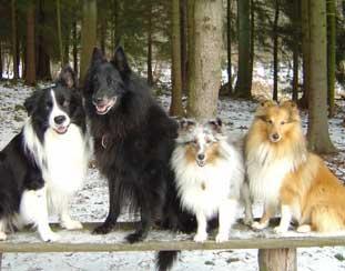 Kengu, Rufus, Buddy, Enzo