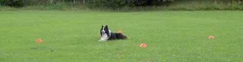 Elliot i feltet - før reglerne påbød bånd rundt om