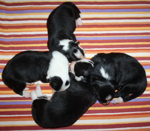 All puppies day 6