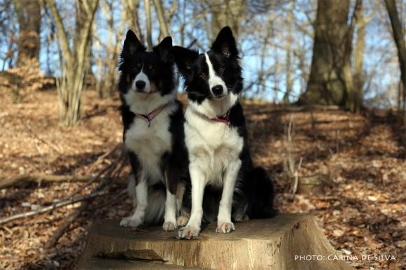 Sookie and Vini