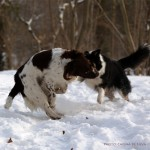 Sookie and Monty playing