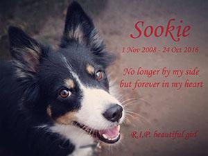 sookie-memory