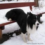 Kopy sidder på bænken