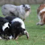 Sookie, Toxy, Qato & Enzo