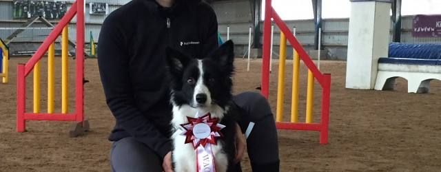Yesterday I went to the World Agility Open (WAO) tryouts and I had entered both Sookie and Vini. We were to run two agility courses and a jumpers course. The […]