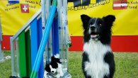 Keep (Vini x KNoxx) competed at the international competition Border Collie Agility Meeting (BAM) where he qualified for the final. Teresa and Keep werestars at the finals and finished second […]