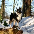 King Winter finally visited us in Denmark – only for a few days though, but managed to take some photos of the dogs. Yes, we love winter wonderland 🙂