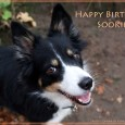Today my sweet little dog turns 5 yo – happy birthday, dear Sookie! I'm so happy for this little dog, who brings me so much joy into my life – she […]