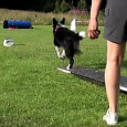 Last week I was at Jenny Damm's training facility where Daisy Peelfrom USAwas instructing a Running Contact and Handling seminar. I had signed Sookie up for the handling part and […]