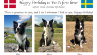 Today Vini's first litter turns 5 years – happy birthday to you all!
