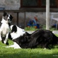 This weekend I got the opportunity to meet Vini's brother Villi. Amazing how they are looking alike – Villi is indeed a very beautiful border collie! Vini was very happy […]