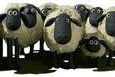 Hyrdetræningen er blevet en hel del mere målrettet og præcis efter vi for første gang trænede slalom med fårene. Jeg fik dog lige udfordret mig selv i den grad, da […]