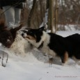 I love snow – and so do my dogs! Winter is so dark but snow lits up and dogs don't get dirty so that's why I love snow though driving […]