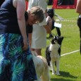 Saturday the Danish Border Collie Club Championship took place and you could compete in agility, obedience, rally-o and conformation show. I had signed Sookie up for agility and Vini for […]